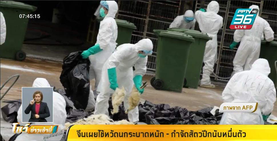 จีน เผย ไข้หวัดนกH5N1 แพร่ระบาดหนัก มณฑลหูหนาน