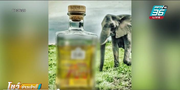 สองสามีภรรยา คิดค้นเหล้าจากมูลช้างแอฟริกา