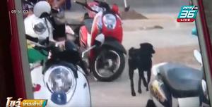 สุนัขจรจัด ไล่กัดเด็กนักเรียน-ผู้ปกครองเจ็บ 4 คน