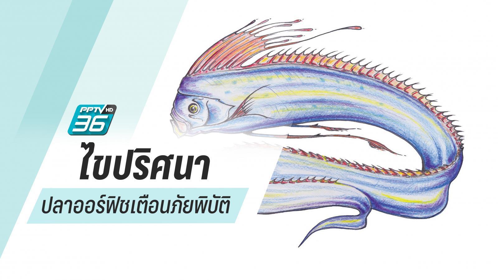 ปลาพญานาค (ออร์ฟิช) เยือนญี่ปุ่น ฤาภัยพิบัติจะบังเกิด!?