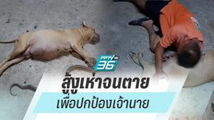 เปิดใจ! เจ้าของสุดเศร้า สุนัขพิตบูลท้องแก่ไล่งูเห่าเข้าบ้าน สุดท้ายตายคู่!!