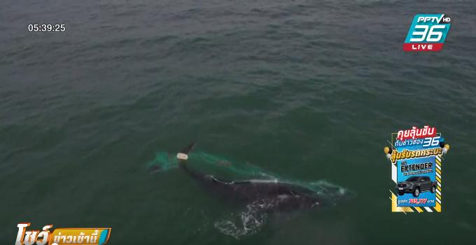 นักอนุรักษ์ช่วยวาฬติดอวนกลางทะเลเม็กซิโก