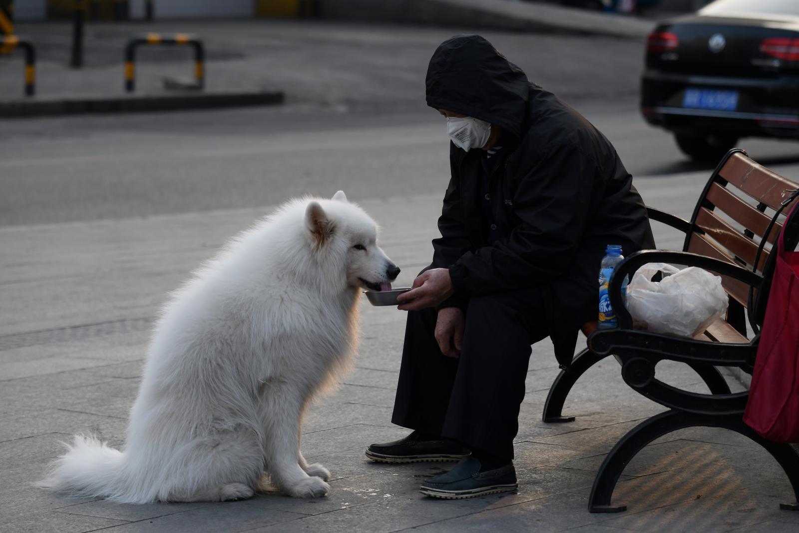 """สุนัขของผู้ป่วย Covid-19 ในฮ่องกง มีผลทดสอบเป็น """"บวก"""""""