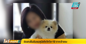 ฮ่องกง พบสุนัขติดโควิด-19 จากเจ้าของ