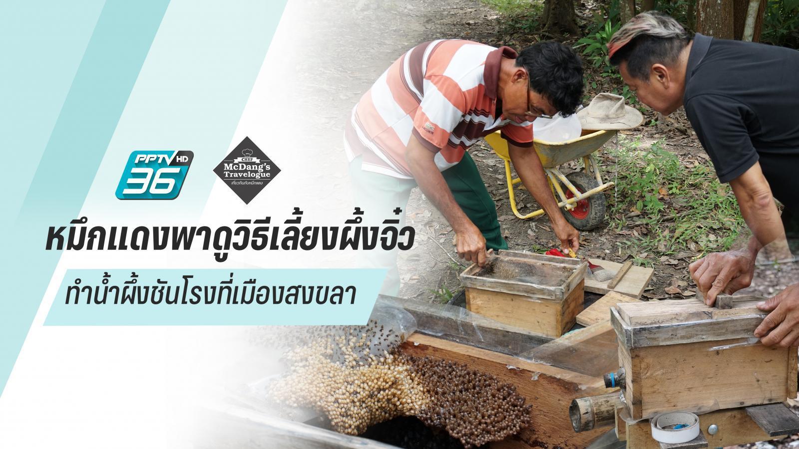 หมึกแดงพาดูวิธีเลี้ยงผึ้งจิ๋ว ทำน้ำผึ้งชันโรงที่เมืองสงขลา