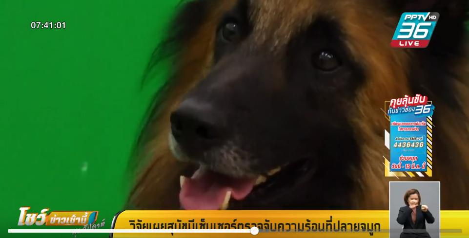 วิจัยเผยสุนัขมีเซ็นเซอร์ตรวจจับความร้อนที่ปลายจมูก
