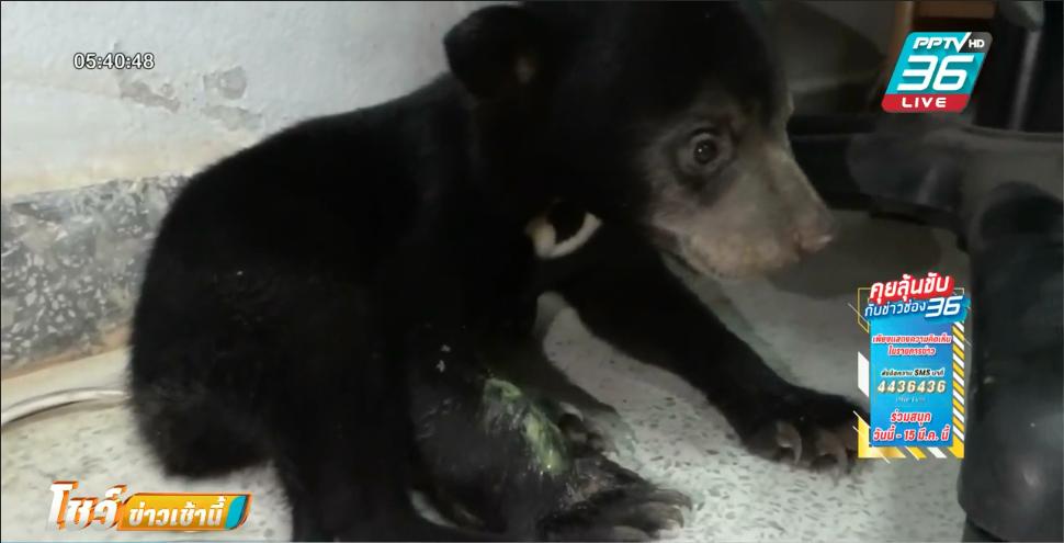 ลูกหมีหมา หนีตายไฟป่าราชบุรี พลัดหลงจากแม่ โชคดีจนท.ช่วยไว้ได้
