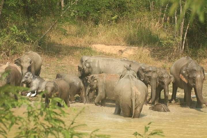 13 มี.ค. วันช้างไทย กับ สถานการณ์ช้างไทยในปัจจุบัน