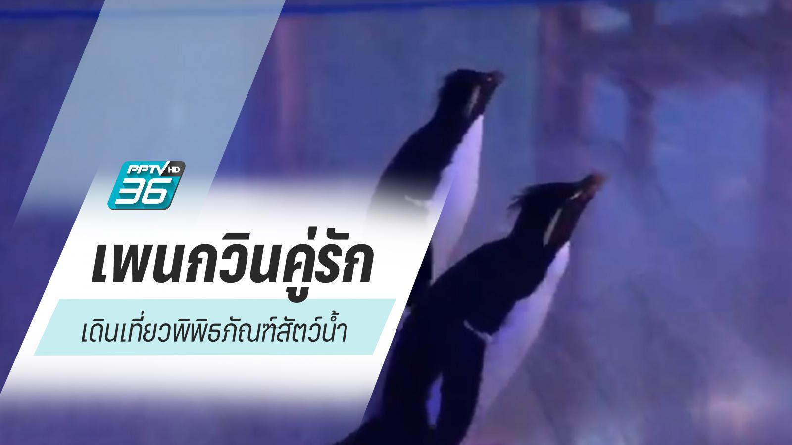 เพนกวินคู่รักจูงมือ เที่ยว Aquarium  ช่วงปิดทำการหนีโควิด-19