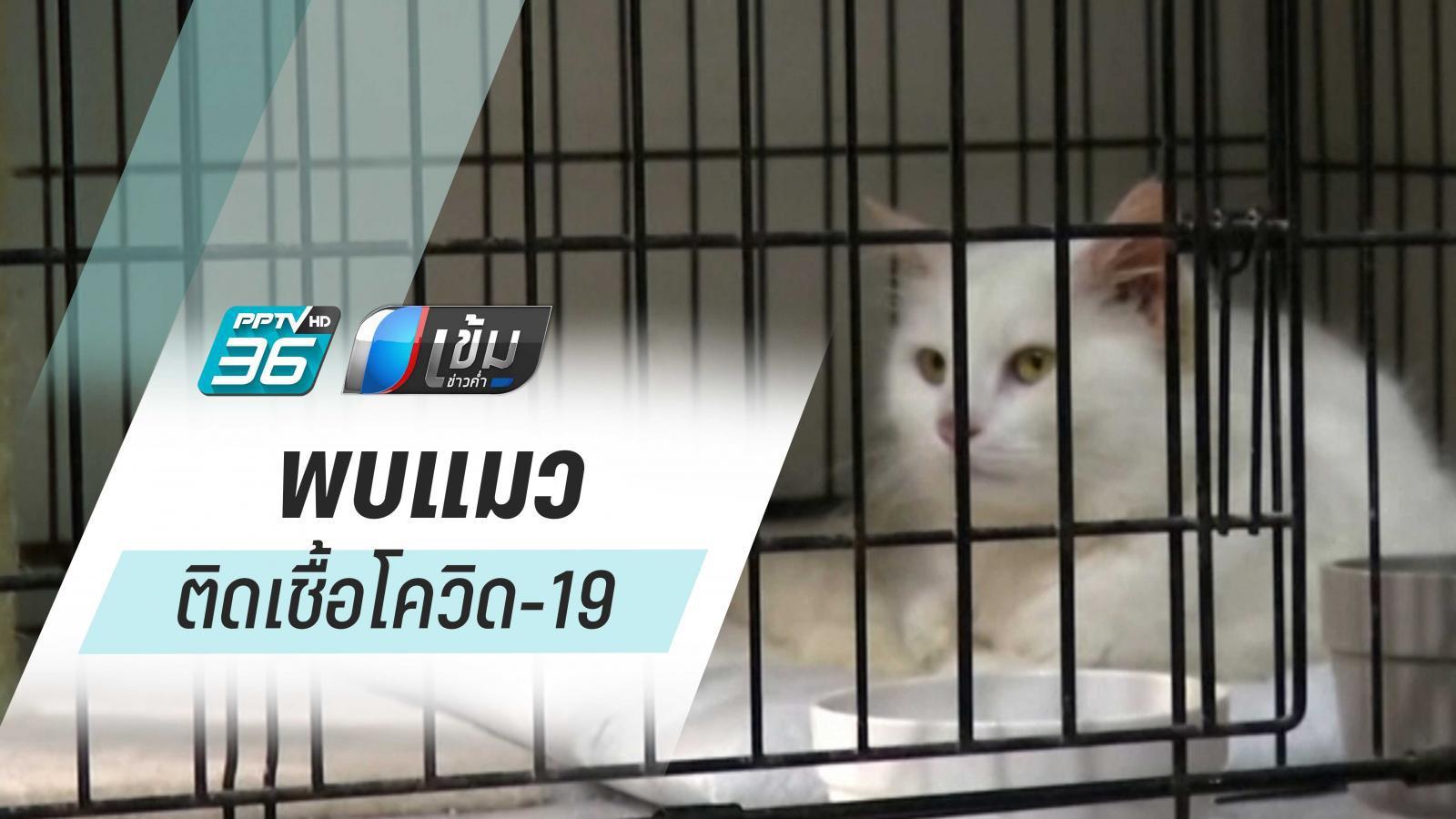 พบแมวติดเชื้อโควิด-19 จากเจ้าของในฮ่องกง