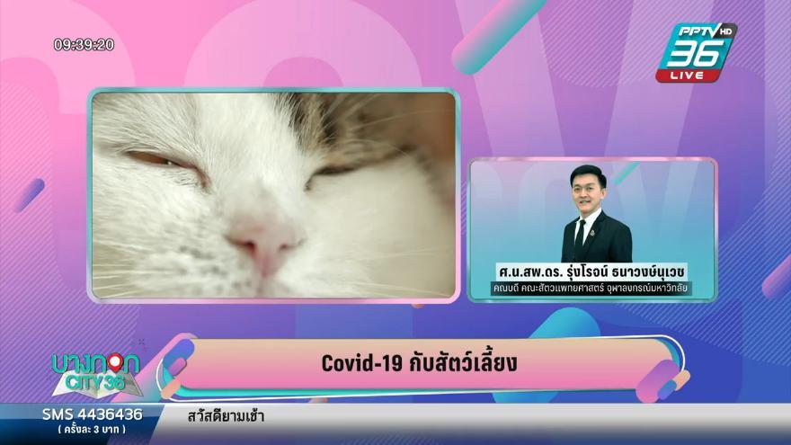 เฝ้าระวัง หมา-แมว ติดเชื้อโควิด-19 ป้องกันแต่อย่าตระหนก