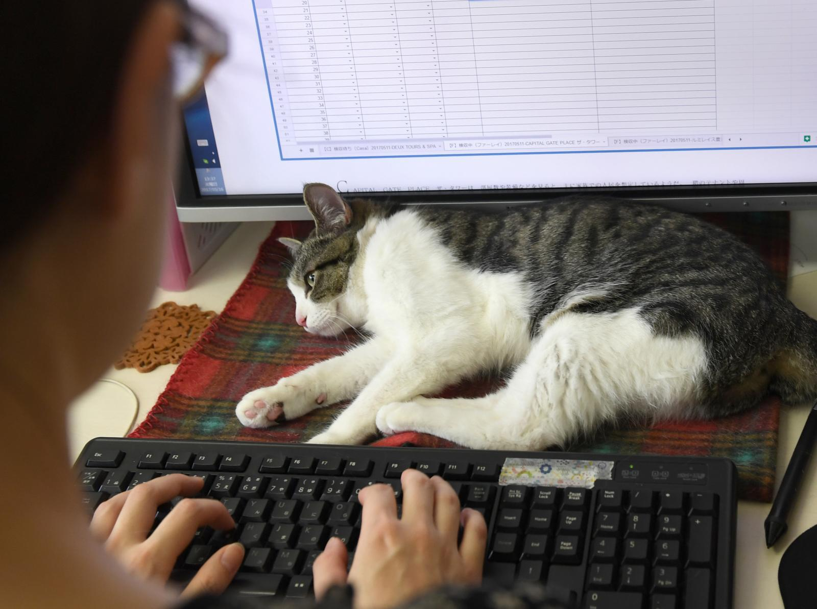 """ผลสำรวจ พบ คนญี่ปุ่นเสียค่าใช้จ่าย """"สุนัข-แมว"""" ปีละเกือบแสน"""
