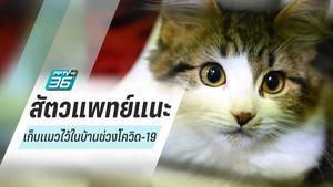 """สัตวแพทย์แนะนำ """"เก็บแมวไว้ในบ้าน"""" ช่วงโควิด-19"""