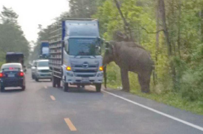 ไม่รู้ไปโกรธใครมา! ช้างป่า ปรี่ชนกระบะ ที่แล่นผ่าน จนพลิกตะแคงตกข้างทาง