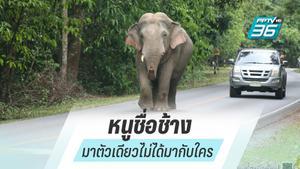 """""""ช้างป่า"""" เดินเล่นกลางถนน หลังปิดอุทยานแห่งชาติเขาใหญ่"""