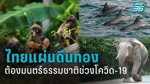ธรรมชาติไทยฟื้นฟูช่วงโควิด-19 เมื่อไร้เงานักท่องเที่ยว