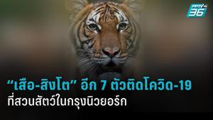 """""""เสือ-สิงโต"""" อีก 7 ตัวในสวนสัตว์บรองซ์ติดโควิด-19"""