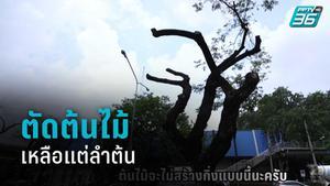 """""""กลุ่มบิ๊กทรี"""" ปกป้องต้นไม้ ถ.วิทยุ หลังเขตปทุมวัน ตัดทิ้งเหลือแต่ลำต้น"""