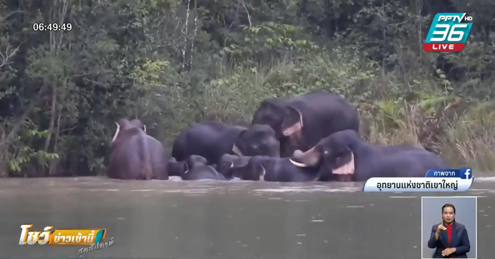ธรรมชาติ-สัตว์ป่าฟื้นตัว หลังปิดเขาใหญ่ 1 เดือน