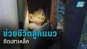 เจ้าของบ้านใจบุญ ยอมตัดเสาเหล็ก ช่วยลูกแมวเพิ่งคลอด