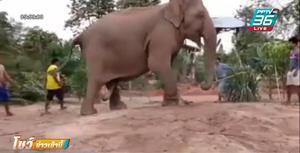 """เปิดวินาที """"พังสายฟ้า"""" ช้างแสนรู้ ตกลูกน้อย"""