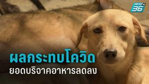 บ้านสุนัขจรจัดได้รับผลกระทบ โควิด-19 ยอดบริจาคอาหารลดลง