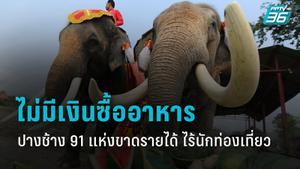 ช้าง 989 เชือก จากปางช้าง 91 แห่ง กำลังขาดอาหารช่วง โควิด – 19 ระบาด