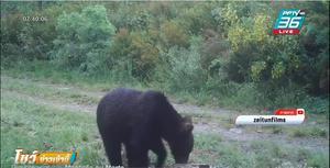 ธรรมชาติฟื้นตัว สเปนพบหมีสีน้ำตาล ครั้งแรกในรอบ 150 ปี