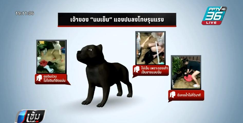 """สัตวแพทย์ ชี้ """"สุนัขพิตบูล"""" ชอบซุกซน - กัดแทะสิ่งของ แนะผู้เลี้ยงต้องเข้าใจนิสัย"""