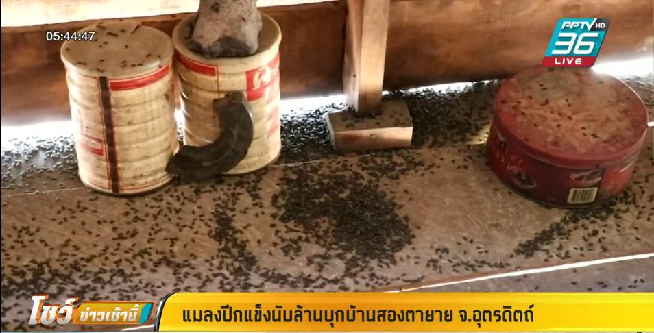 2 ตายาย สยอง แมลงปีกแข็งนับล้านตัว บุกยึดบ้าน