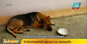 หมาวัด-แมววัด โดนพิษโควิด-19 ไม่มีข้าวก้นบาตรกิน หลังพระไม่ได้บิณฑบาตร