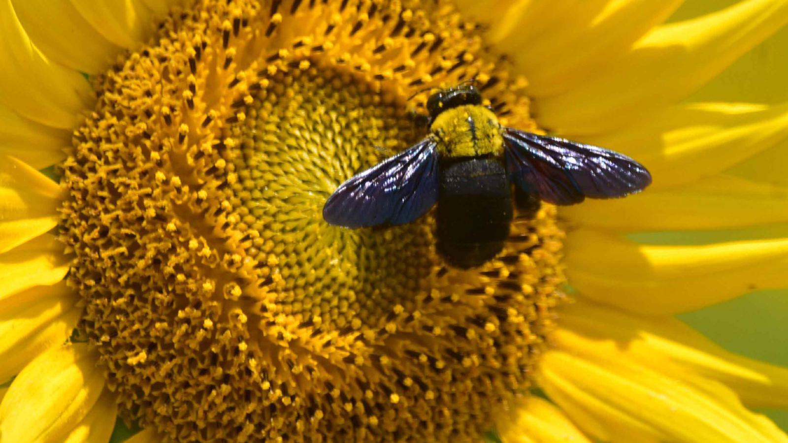 ไวรัสโคโรนา, โควิด-19, COVID-19, ผึ้ง, ธรรมชาติฟื้นตัว, ข่าวต่างประเทศ