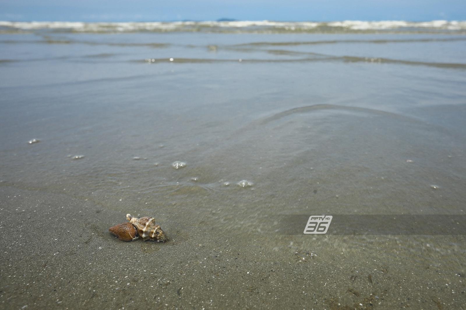 นายกเมืองแสนสุข ผุดไอเดียปิดหาดบางแสน 1 วัน/สัปดาห์ ฟื้นธรรมชาติ