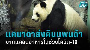 สวนสัตว์แคนาดาจะคืนหมีแพนด้ายักษ์ให้จีน หลังโควิด-19 ทำขาดแคลนไผ่สด