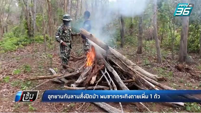 อุทยานทับลาน สั่งปิดป่า พบซากกระทิงถูกชำแหละตัวที่ 2 ในรอบเดือน