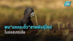 นกกระตั้วสายพันธุ์ใหม่ถูกค้นพบในออสเตรเลียตะวันตก
