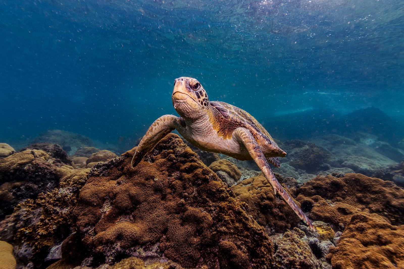 เต่าทะเลปรากฏตัวใกล้สนามบินริโอ หลังมีเที่ยวบินน้อยลงช่วงโควิด-19