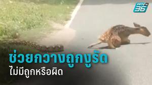 ผอ.สวนสัตว์เขาเขียว ยัน ช่วยกวางถูกงูรัด ไม่มีถูกหรือผิด เพราะไม่ได้เจอในป่า