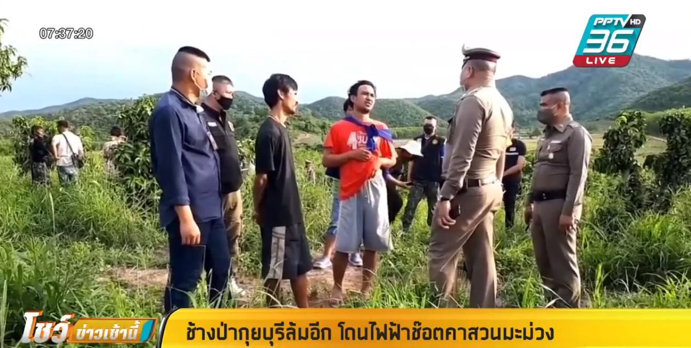 เศร้า! ช้างป่ากุยบุรี โดนไฟฟ้าช๊อตตายคาสวนมะม่วง