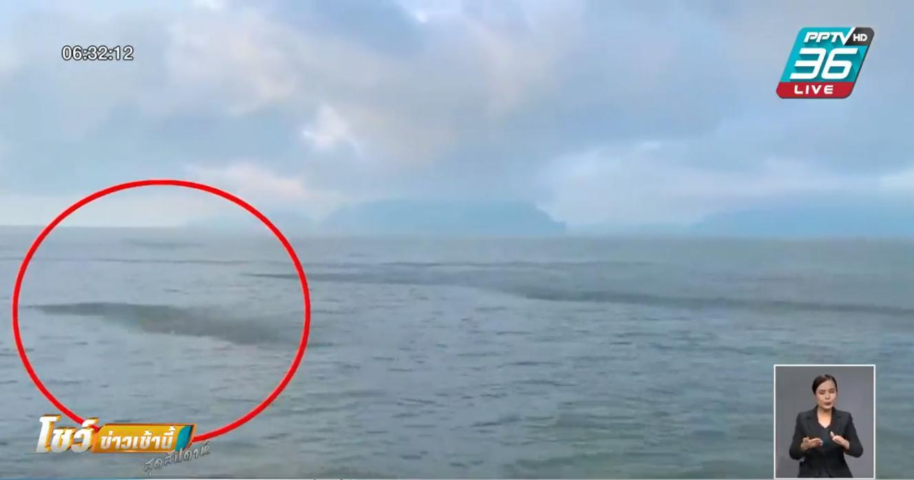 ปลาทู นับล้านโผล่ทะเลกระบี่หลังปิดอ่าวเพียง 2 เดือน