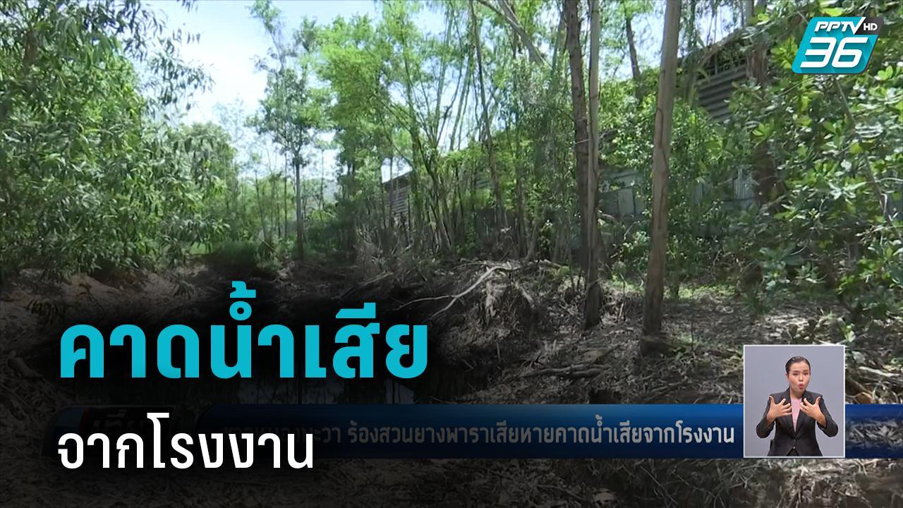 ชาวหนองพะวา ร้องสวนยางพาราเสียหายคาดน้ำเสียจากโรงงาน