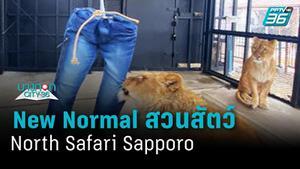 สวนสัตว์ที่ญี่ปุ่น เปิดขายกางเกงยีนส์รอยเขี้ยวสิงโต