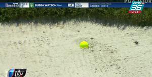 """""""บับบ้า วัตสัน"""" เจอลูกปูเกาะลูกกอล์ฟระหว่างแข่ง"""