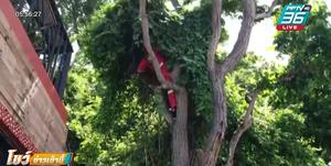สุดแสบ ลิงเขาสามมุกฉกทอง 2 สลึงของ นทท.ไว้บนต้นไม้