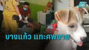 สลด! สุนัขบางแก้ว แทะศพยายนอนตายด้วยโรคแขนขาอ่อนแรง