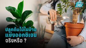 ปลูกต้นไม้ในบ้านอันตราย เพราะแย่งออกซิเจน จริงหรือ?