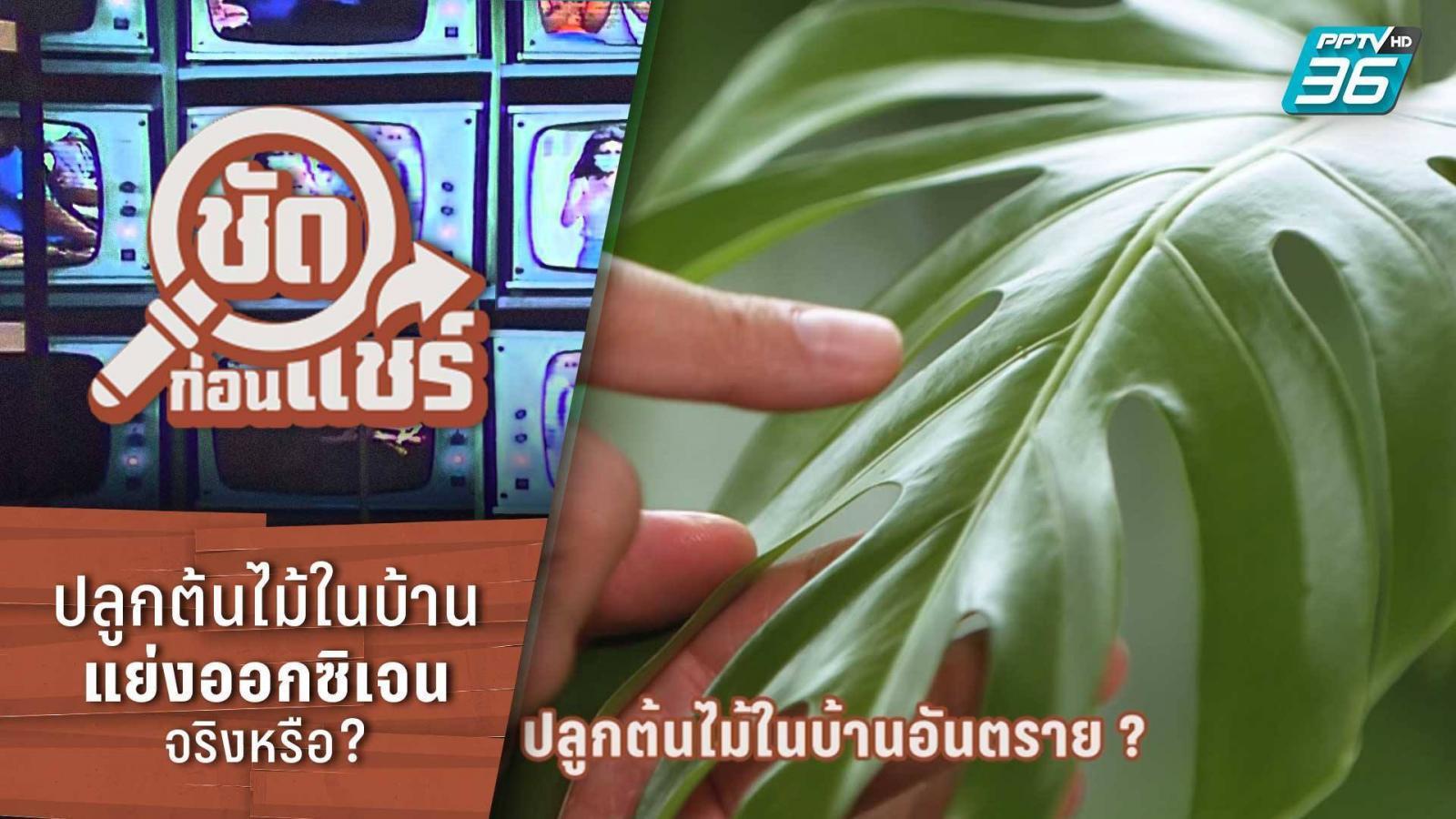 ชัดก่อนแชร์ | ปลูกต้นไม้ในบ้าน แย่งออกซิเจน จริงหรือ? | PPTV HD 36