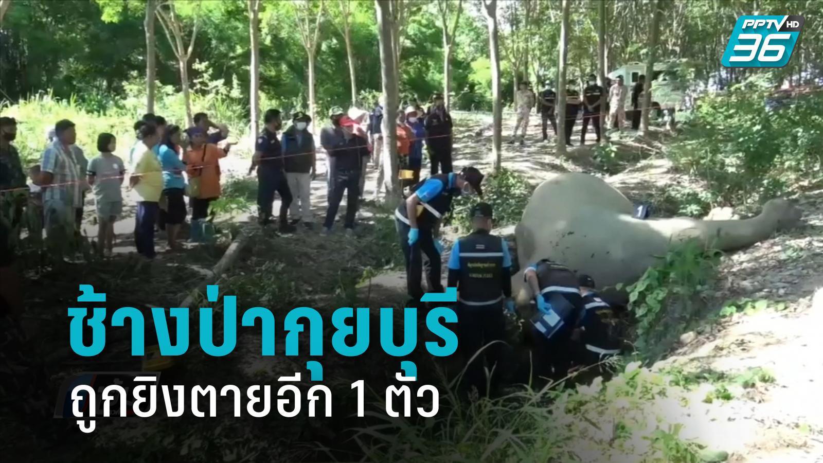ช้างป่ากุยบุรี ถูกยิงตายอีก 1 ตัว ชาวบ้านอ้างป้องกันตัว