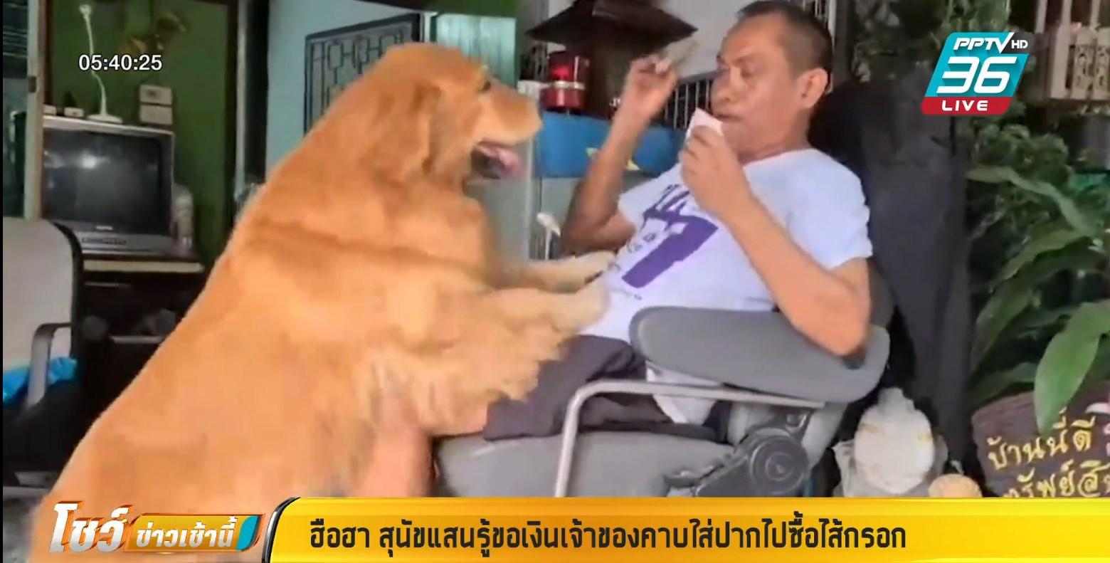 แสนรู้ !! น้องหมาขอเงินเจ้าของ คาบไปซื้อไส้กรอกกินเอง