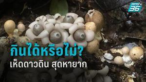 """เปิดงานวิจัย """"เห็ดดาวดิน"""" สุดหายาก มีหลายพันธุ์ กินได้หรือไม่?"""